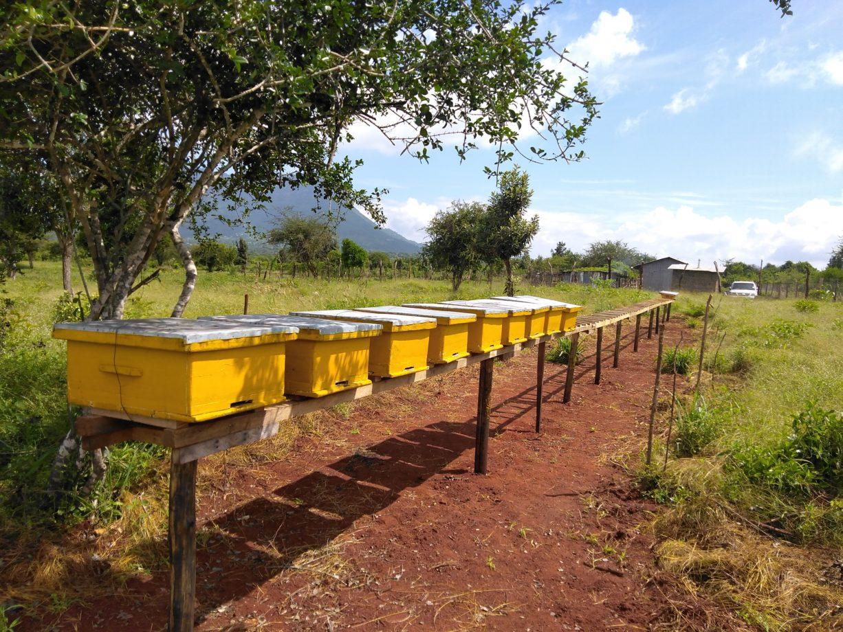 Bienenstöcke in Taita Taveta